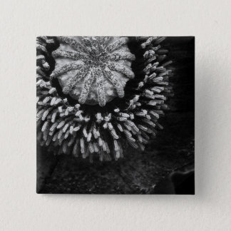 BW Poppy 2 Inch Square Button