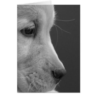 BW Pup Profile Card