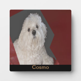 C0SMO King of the Maltese Plaque