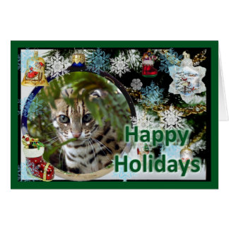 c-bengal-cat-107-f card