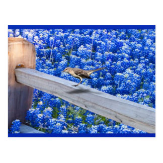 C.E. Mockingbird/Bluebonnets Postcard