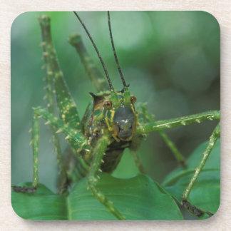 CA, Costa Rica, La Selva Biological Station, Drink Coasters