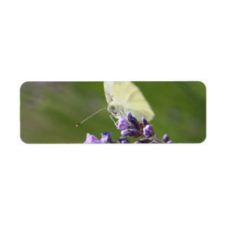 cabbage butterfly on lavendel return address label