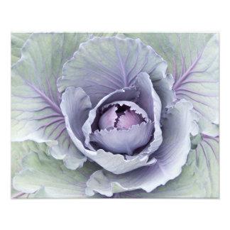 Cabbage Photo Print