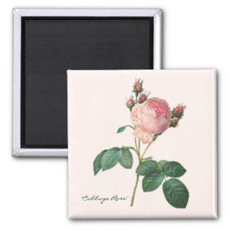 Cabbage Rose Botanical Print Magnet
