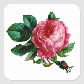 Cabbage Rose Stickers