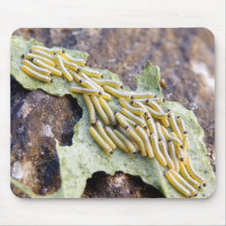 Cabbage White Caterpillars Mouse Mat Mouse Pad