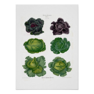 Cabbages Poster