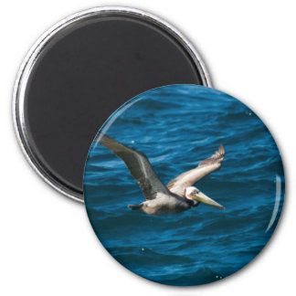 Cabo Pelican 1 2 Inch Round Magnet