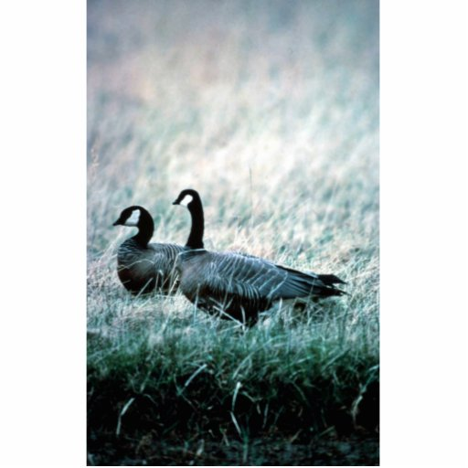 Cackling Canada goose pair Cut Out
