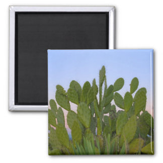 Cacti and sisal in Dry Forest Square Magnet
