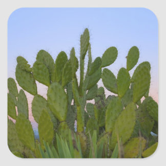 Cacti and sisal in Dry Forest Square Sticker