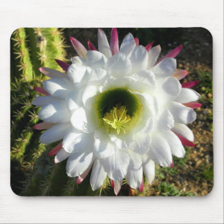 Cacti Bloom Mouse Pad