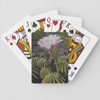 Cacti Blooming Playing Cards