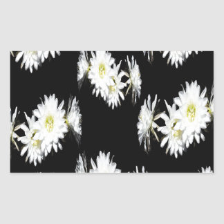 Cacti_Flower_Envy,_
