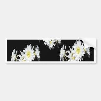 Cacti_Flower_Envy,_ Bumper Sticker