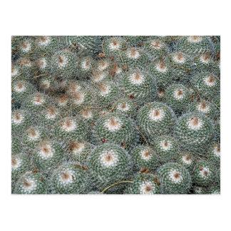 Cactus at Desert Botanical Gardens, Phoenix-Scotts Postcard