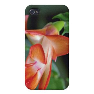 Cactus blossom Edmonton Canada flowers Cases For iPhone 4