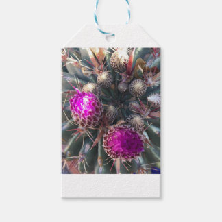 Cactus blossom gift tags