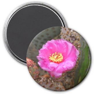 Cactus blossom refrigerator magnets