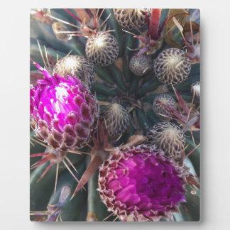 Cactus blossom plaque