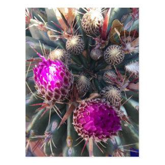 Cactus blossom postcard
