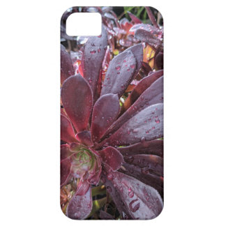 Cactus Case For The iPhone 5