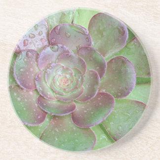 Cactus Coasters