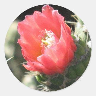 Cactus Flower Classic Round Sticker