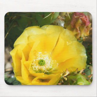 cactus flower mouse pad