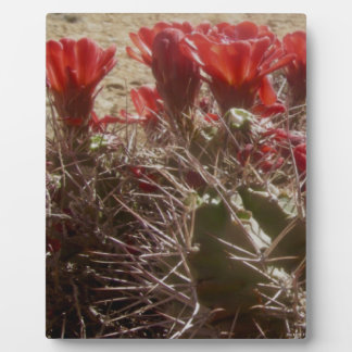 Cactus Flower Original Plaque