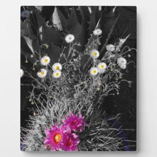 Cactus Flower Series Plaque