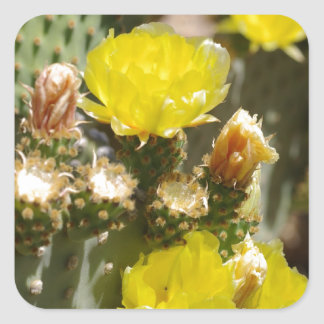 Cactus Flower Square Sticker