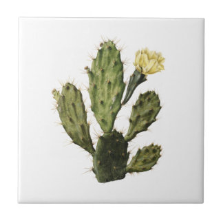 Cactus Flower Vintage Drawing Ceramic Tile