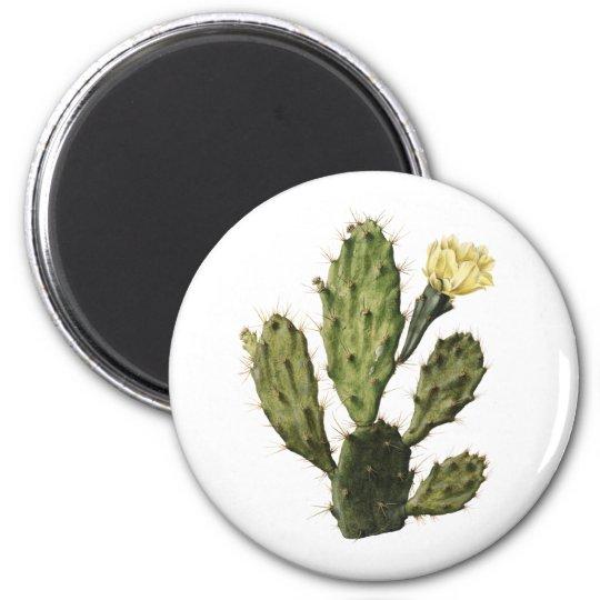 Cactus Flower Vintage Drawing Magnet