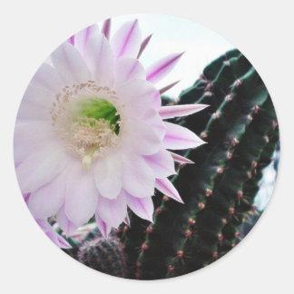 Cactus Flower White Round Sticker