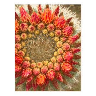 Cactus Flowers 016a Postcard