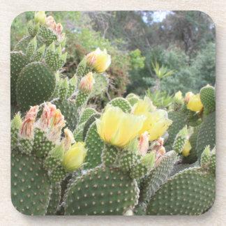 Cactus Flowers Coasters