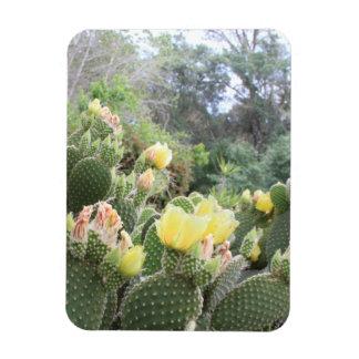 Cactus Flowers Magnet