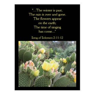 Cactus Flowers Song of Solomon Postcard