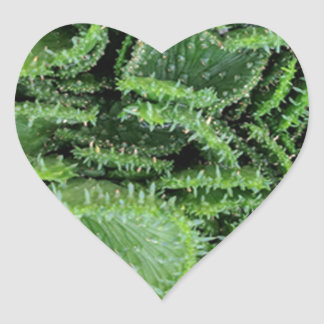 Cactus Heart Sticker