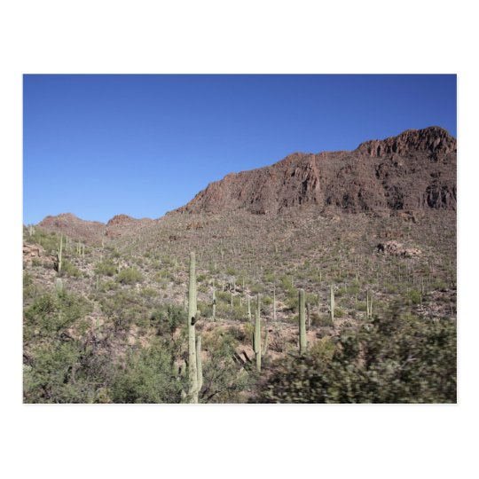 Cactus Landscape Postcard