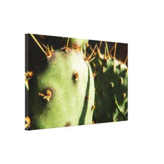 Cactus Macro Canvas Print