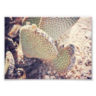 Cactus Photo Print