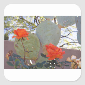Cactus Rose Square Sticker