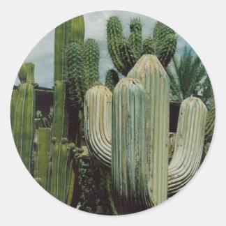 Cactus Round Sticker