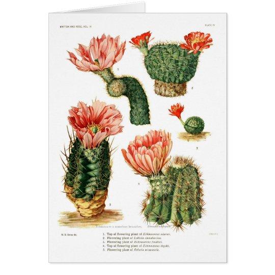 Cactus species card