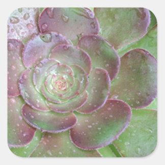 Cactus Square Sticker