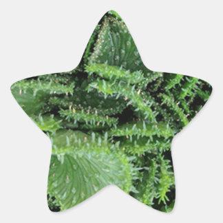 Cactus Star Sticker