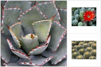 Cactus & Succulent Postcards